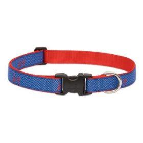 Club nyakörvek nagytestű kutyáknak - 2,5 cm széles