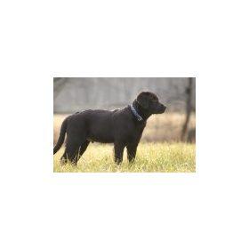 Lupine közepes termetű kutyáknak (7-45 kg között)
