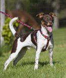 Outlet Lupine középtermetű kutyáknak (1,9 cm szélességben)