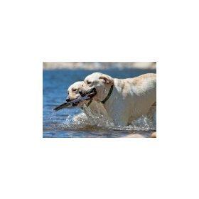 Lupine nagytestű kutyáknak (10-80 kg)