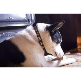 Outlet Lupine nagytestű kutyáknak (2,5 cm széles)
