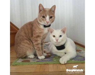Kerítésrendszerek macskáknak