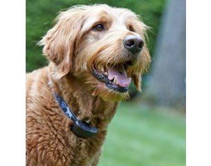 Dogwatch kutya- és macska kerítés rendszerek