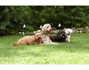 Láthatatlan kutyakerítés rendszerek