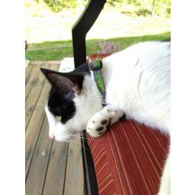 Lupine Outlet termékek macskáknak